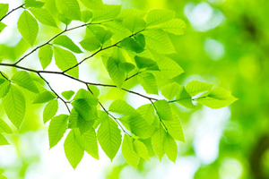 森を見て木を考える。